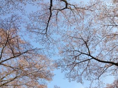 Photo 2014-04-09, 3 54 47 PM