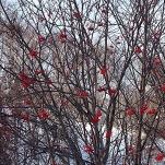 Photo 2014-12-26, 3 01 52 PM (1)
